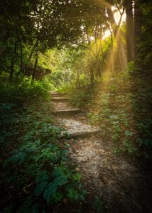 Steps leading through forest with sun beaming through